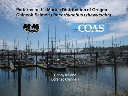 Bobby Ireland Lorenzo Ciannelli Patterns in the Marine Distribution of Oregon Chinook Salmon (Oncorhynchus tshawytscha)