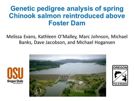 Genetic pedigree analysis of spring Chinook salmon reintroduced above Foster Dam Melissa Evans, Kathleen O'Malley, Marc Johnson, Michael Banks, Dave Jacobson,