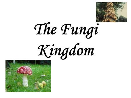 The Fungi Kingdom. Mycology -the study of fungi fungi - singular fungus - plural.