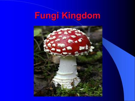 Fungi Kingdom. Mycology -the study of fungi fungi - plural fungus – singular 1) eukaryotic Cells have a nucleus 2) heterotrophic they do not make their.