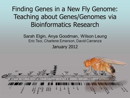 Finding <strong>Genes</strong> in a New Fly Genome: Teaching about <strong>Genes</strong>/Genomes via Bioinformatics Research Sarah Elgin, Anya Goodman, Wilson Leung Eric Tsoi, Charlene.