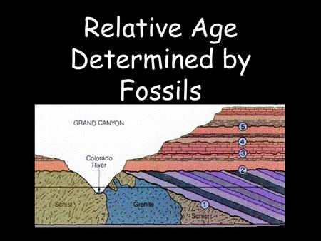 Relative Age Determined by Fossils