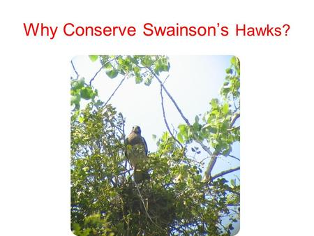 Why Conserve Swainson's Hawks?. Two Reasons Endangered Species Act –Section 2080 –Incidental take permit –HCP CEQA –Mandatory finding of significance.