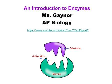 An Introduction to Enzymes Ms. Gaynor AP Biology https://www.youtube.com/watch?v=vTQybDgweiE.
