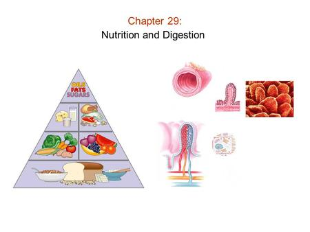 Chapter 29: Nutrition and Digestion. Chapter 29: Nutrition and Digestion Nutrition: Process of acquiring / processing nutrients into usable form Function.