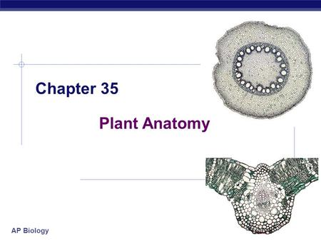 AP Biology Chapter 35 Plant Anatomy AP Biology Basic anatomy  root  shoot (stem)  leaves.