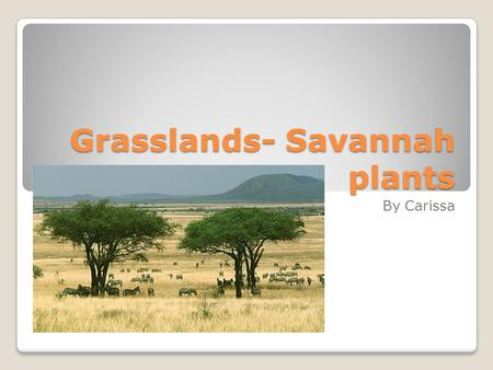 Grasslands- Savannah plants By Carissa. Soil Roots, that can extend some 6 into the ground, and the soil together. The roots prevent the grasslands fine.