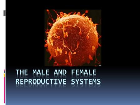  Your life began as a single cell.  That single cell was produced by the joining of two other cells  Egg: female sex cell with 23 chromosomes  Sperm: