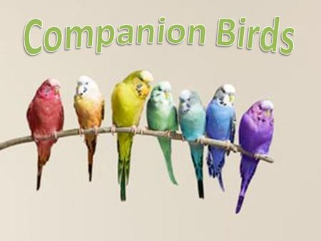 Companion Birds Increasingly popular – 16 million pet birds Great responsibility – Specific nutritional and housing requirements – Lifetime commitment.