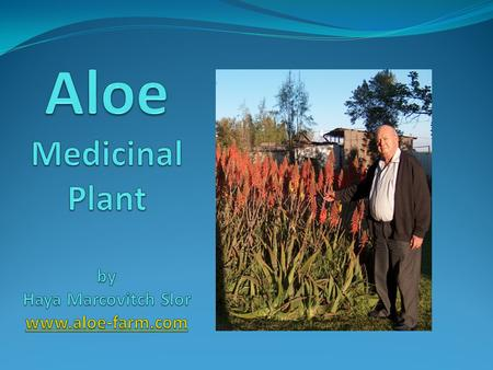 Aloe-Vera and Aloe-Arborescens are two of hundreds species of aloes. They are succulent plants spread in Asia, Africa and other tropical areas of the.