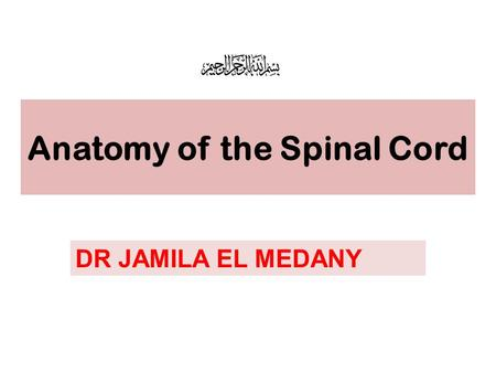 Anatomy of the Spinal Cord DR JAMILA EL MEDANY. OBJECTIVES At the end of the lecture, the students should be able to: Describe the external anatomy of.