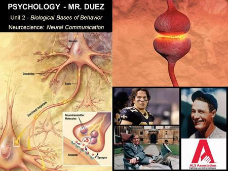 PSYCHOLOGY - MR. DUEZ Unit 2 - Biological Bases of Behavior Neuroscience: Neural Communication.
