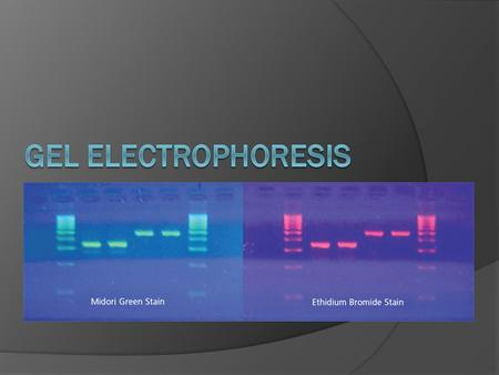 What is Gel Electrophoresis?  Electro- electricity -phoresis-to carry across  A technique used to separate and analyze DNA and proteins Can be separated.