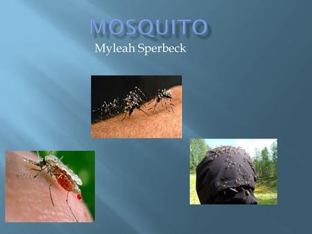 Myleah Sperbeck  What gives people diseases? What drinks blood? What gives people bug bites? What lives by shady places? Mosquitos. Let's learn more.