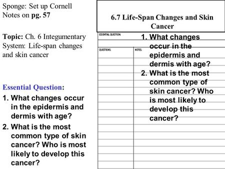 Sponge: Set up Cornell Notes on pg. 57 Topic: Ch. 6 Integumentary System: Life-span changes and skin cancer Essential Question: 1.What changes occur in.