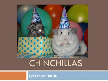 CHINCHILLAS By: Bennett Resnick. Chinchillas as Pets  Chinchillas make good pets. But be careful how hold them, they are delicate and squirmy!