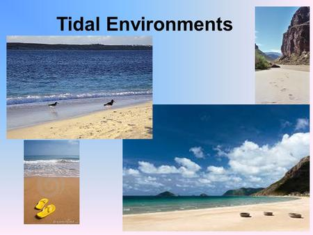 Tidal Environments. A. Turbulence - wave action B. Keeps inshore waters from stratifying (layering) C. Causes substrate particles (sand) to remain suspended.