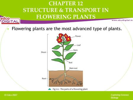 © Edco 2007 Exploring Science Biology Flowering plants are the most advanced type of plants. CHAPTER 12 STRUCTURE & TRANSPORT IN FLOWERING PLANTS.