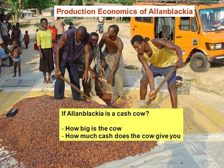 Production Economics of Allanblackia If Allanblackia is a cash cow? - How big is the cow - How much cash does the cow give you.