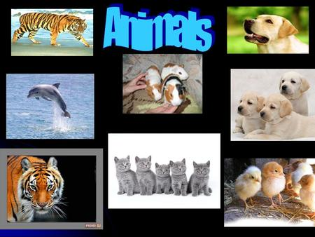 Across 1. An animal that can bark and used for guarding the household 4. Any of various burrowing animals of the family having long ears and short tails.