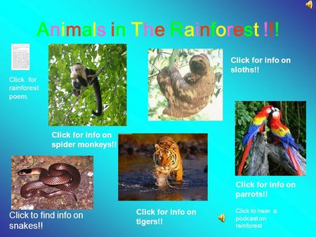 Animals in The Rainforest !!!