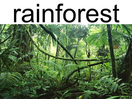Rainforest.