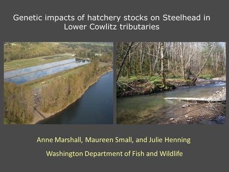 Genetic impacts of hatchery stocks on Steelhead in Lower Cowlitz tributaries Anne Marshall, Maureen Small, and Julie Henning Washington Department of Fish.
