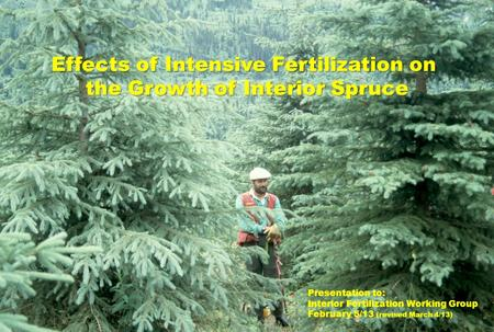 Effects of Intensive Fertilization on the Growth of Interior Spruce Presentation to: Interior Fertilization Working Group February 5/13 (revised March.