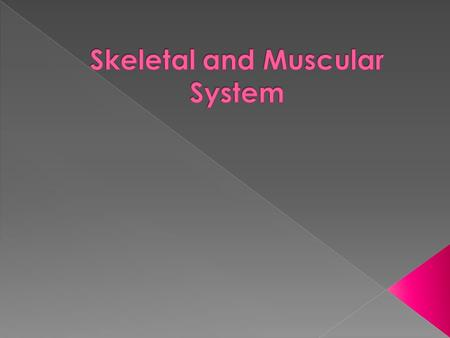  Axial Skeleton – supports the central axis of the body › Skull Skull › Clavicle Clavicle › Ribs and Sternum Ribs and Sternum › Vertebrae Vertebrae 