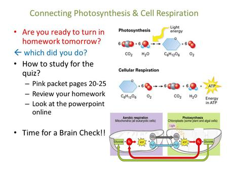 Connecting Photosynthesis & Cell Respiration Are you ready to turn in homework tomorrow?  which did you do? How to study for the quiz? – Pink packet pages.