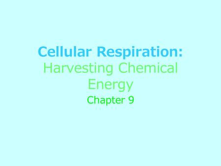 Cellular Respiration: Harvesting Chemical Energy Chapter 9.