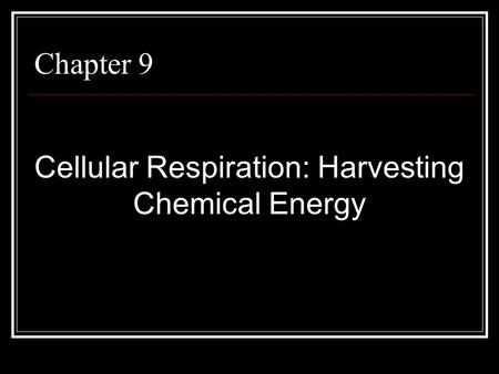 Chapter 9 Cellular Respiration: Harvesting Chemical Energy.
