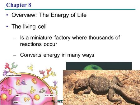 Copyright © 2005 Pearson Education, Inc. publishing as Benjamin Cummings Chapter 8 Overview: The Energy of Life The living cell – Is a miniature factory.