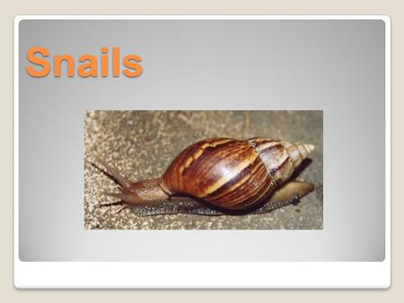 Snails. Snails are molluscs. They have soft bodies protected by a hard shell. The body of the snail is usually moist and often slimy.