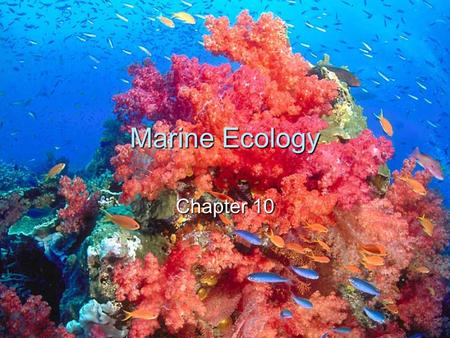 Marine Ecology Chapter 10. 2 Ecology  The study of the interactions between organisms and their environment.  Also studies how these interactions affect.