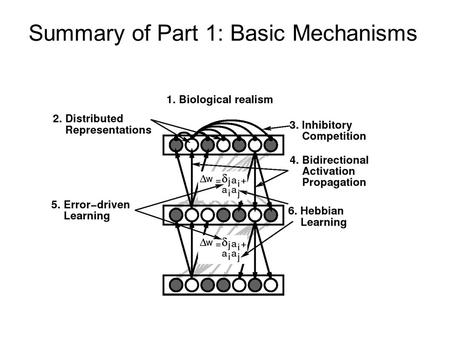 Summary of Part 1: Basic Mechanisms. Micro vs Macro scales Micro = basic mechanisms common across brain areas Macro = differentiation, organization, and.