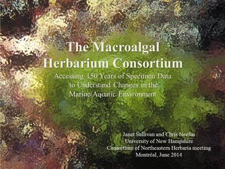 The Macroalgal Herbarium Consortium Accessing 150 Years of Specimen Data to Understand Changes in the Marine/Aquatic Environment Janet Sullivan and Chris.