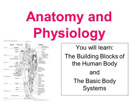 Anatomy and Physiology You will learn: The Building Blocks of the Human Body and The Basic Body Systems.
