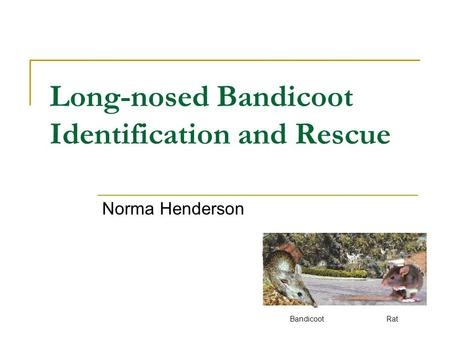 Long-nosed Bandicoot Identification and Rescue