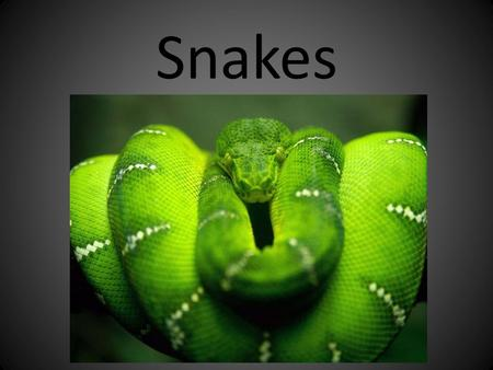 Snakes. External Anatomy no limbs nostrils no external ears no eyelids scales - of various size depending on body location (for ID - keeled or not keeled)