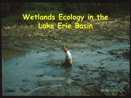 Wetlands Ecology in the Lake Erie Basin. Overview What is a wetland? Case study Types of treatment wetlands Wetlands for water quality Important variables.