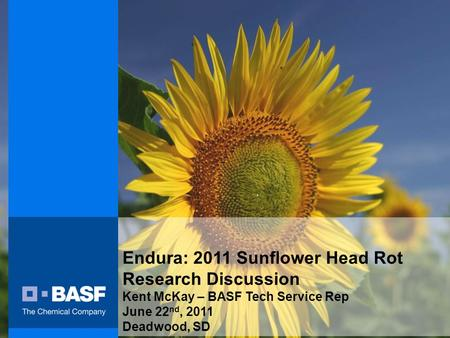 Endura: 2011 Sunflower Head Rot Research Discussion Kent McKay – BASF Tech Service Rep June 22 nd, 2011 Deadwood, SD.