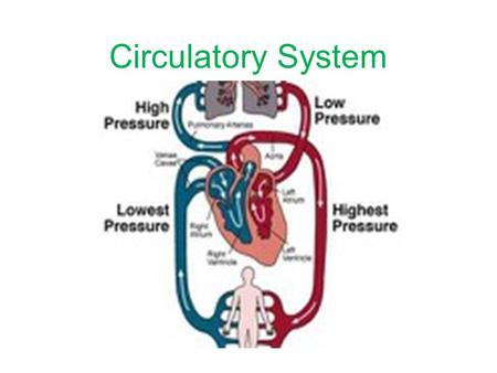 Circulatory System. Parts of the Circulatory System Blood Is Thicker than Water Now you know that the circulatory system carries food, oxygen, and water.