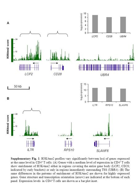 Log 2 (expression) H3K4me2 score A SLAMF6 log 2 (expression) Supplementary Fig. 1. H3K4me2 profiles vary significantly between loci of genes expressed.
