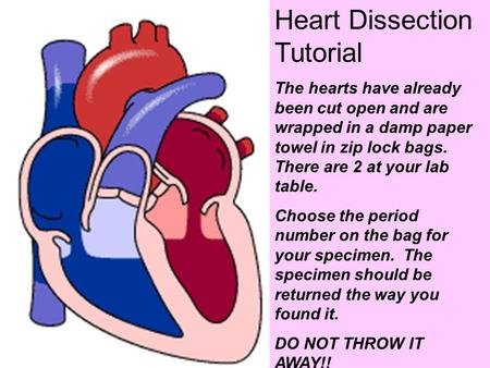 Heart Dissection Tutorial The hearts have already been cut open and are wrapped in a damp paper towel in zip lock bags. There are 2 at your lab table.