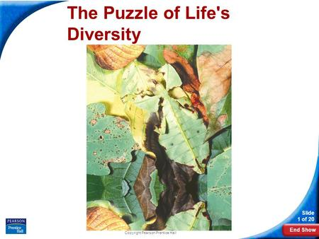End Show Slide 1 of 20 Copyright Pearson Prentice Hall The Puzzle of Life's Diversity.