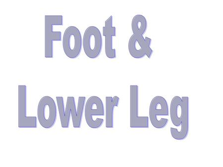 Foot & Lower Leg.