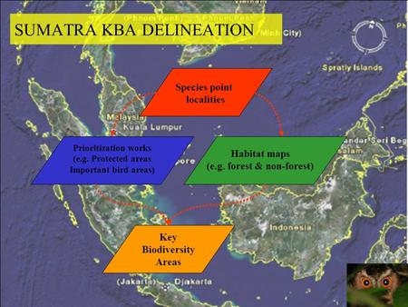 SUMATRA KBA DELINEATION Species point localities Prioritization works (e.g. Protected areas Important bird areas) Key Biodiversity Areas Habitat maps (e.g.