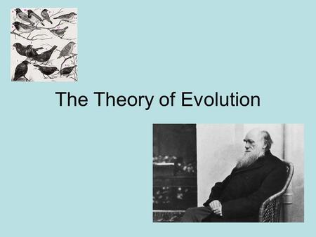 The Theory of Evolution. What is Evolution? Change over time Fossil evidence shows that living things have not always been the same as today.