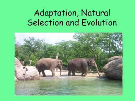 Adaptation, Natural Selection and Evolution. Natural Selection Response: Natural selection has no intentions or senses; it cannot sense what a species.